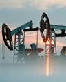 Digital Oil